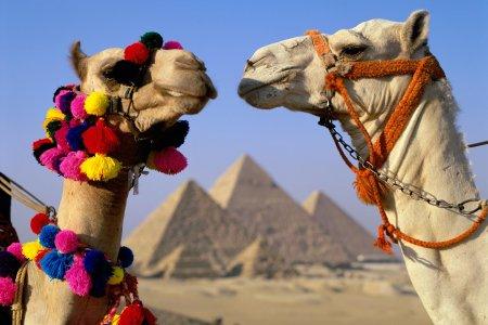 Когда откроют Египет 2017: последние новости для туристов из России