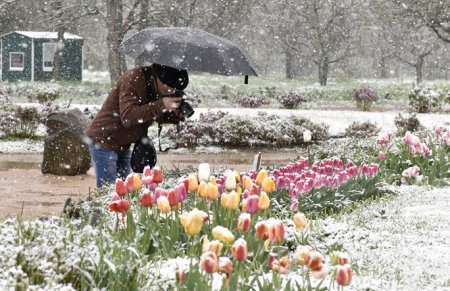 Погода 12 мая: В Москве из-за аномального снегопада образовался снежный покров