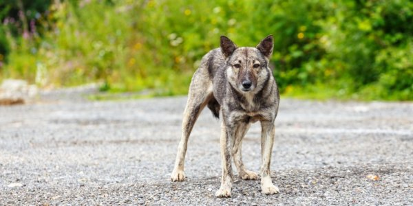 На 8-летнюю девочку в Твери напала бродячая собака