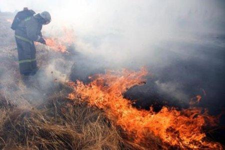 Лесные пожары в Красноярском крае в 2017 году: площадь пожаров, режим ЧС