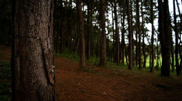 В лесу Перми обнаружили труп мужчины
