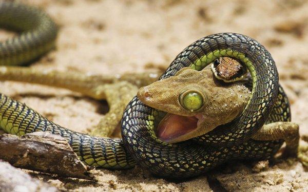 В Домодедово арестован груз с более 450 рептилиями