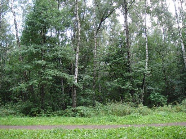 В лесополосе Челябинска нашли тело умершей 3 года назад женщины