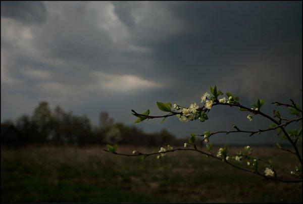 На Иваново вновь обрушатся ураганный ветер и грозы