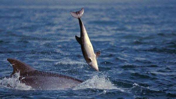 В Одессе на берег моря выбросило десятки мертвых дельфинов