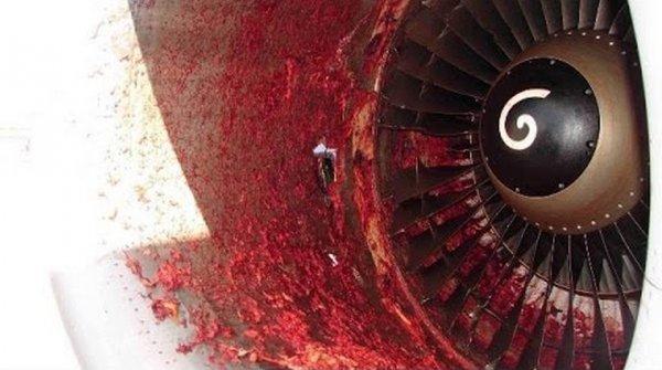 Попадание птицы в двигатель самолета вызвало задержку рейса Москва-Ижевск