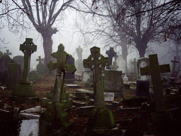 В Благовещенске полиция проверяет данные о пикнике на кладбище