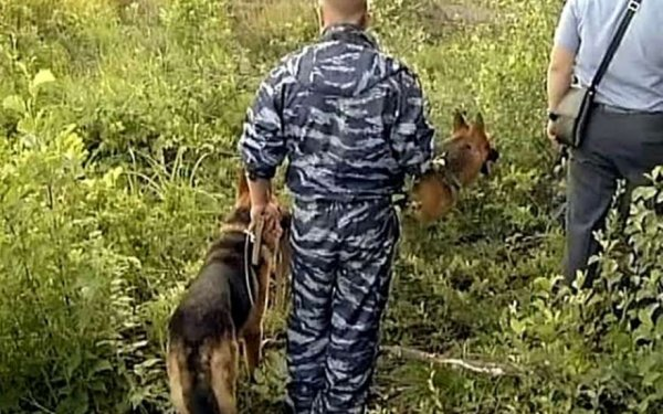 Спасатели ЕАО узнали, где искать пропавшую 3-летнюю Надю Пыжову