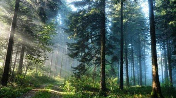 В лесу Красноярского края обнаружили человеческие останки