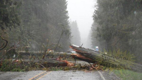 В Белгородской области прошел разрушительный ураган