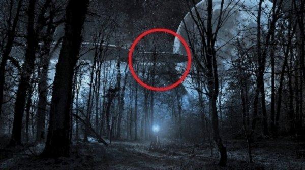 В ночном лесу возле Белгорода заметили НЛО