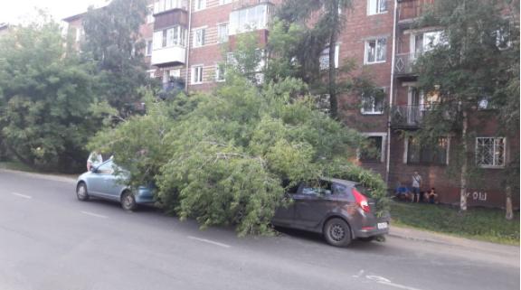 В Иркутске старое дерево упало на два автомобиля