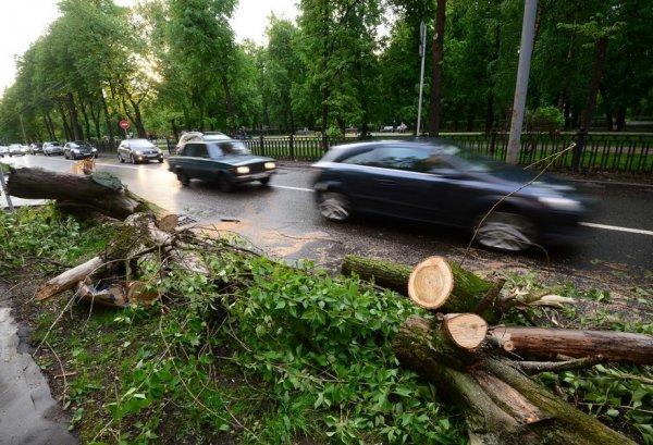 В Москве от урагана пострадал один человек