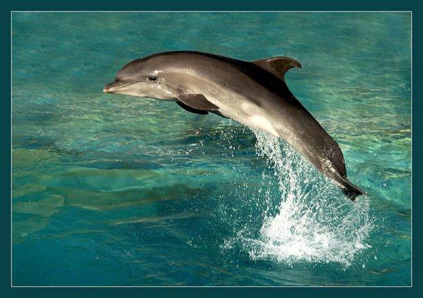 Крымские мореплаватели спасли от гибели краснокнижного дельфина