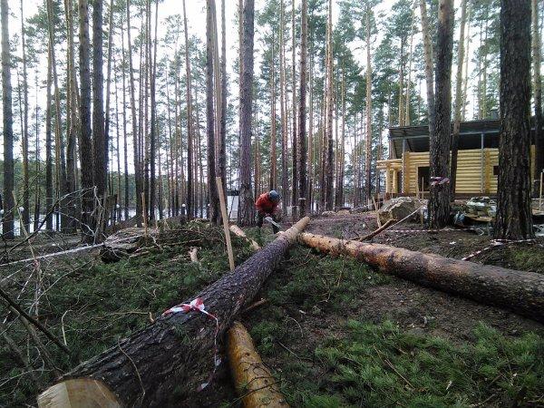 В Нижегородской области подросток умер на незаконной валке леса