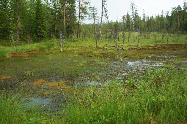 В Омской области в болоте найден труп мужчины