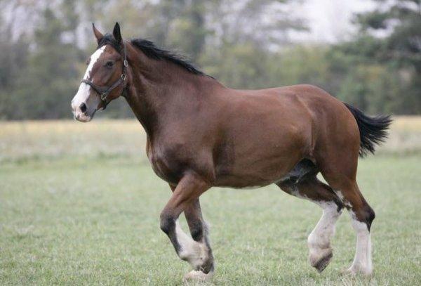 В ЕАО от укуса лошади погиб мужчина