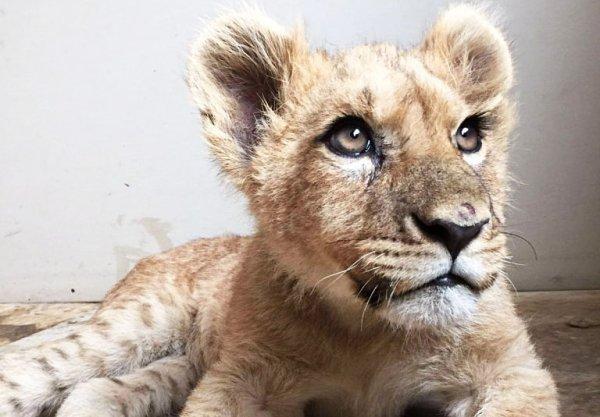 Прокуратура Сочи изъяла у местного фотографа льва и орла