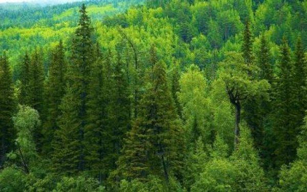 В лесу Новгородской области пропали двое несовершеннолетних братьев