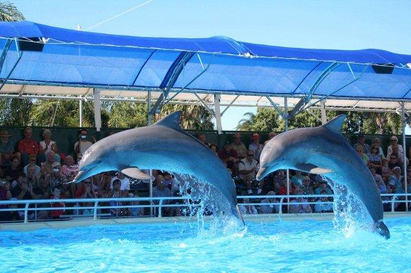 В Приморском океанариуме погиб третий дельфин