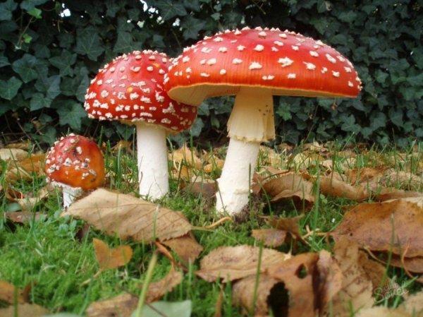 В Воронежской области 3 человек госпитализировали из-за отравления грибами
