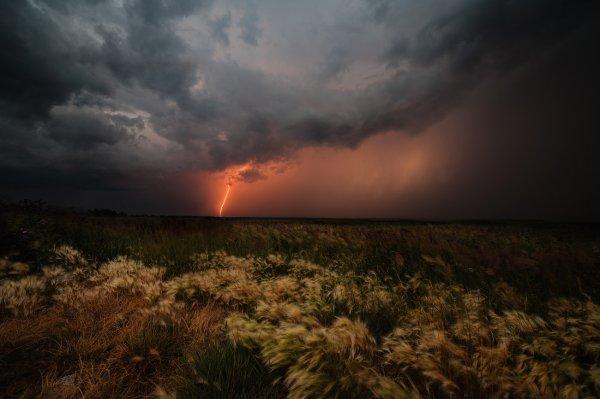 Молния в Казахстане убила пастуха и 1,5 тысячи овец