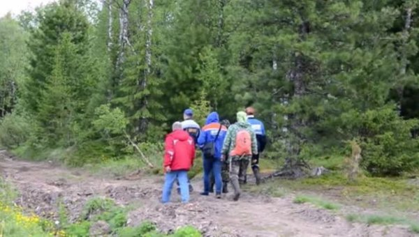 В Курганской области идут поиски потерявшихся в лесу мальчиков