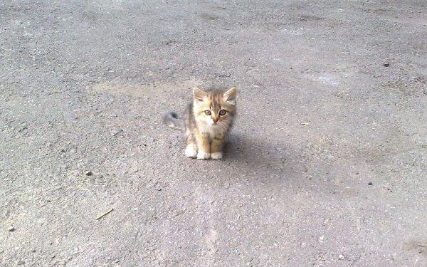 На Савёловской эстакаде девушка хотела спасти котёнка, но стала виновником ДТП
