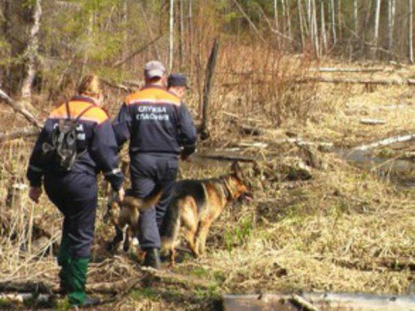 Исчезнувшего под Липецком трехлетнего ребенка разыскивают 150 правоохранителей и добровольцев