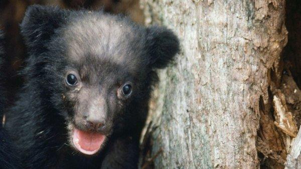 В Приморье медвежонок попал в полицейское отделение