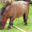 В Москве правоохранители поймали сбежавшего из зоопарка пони