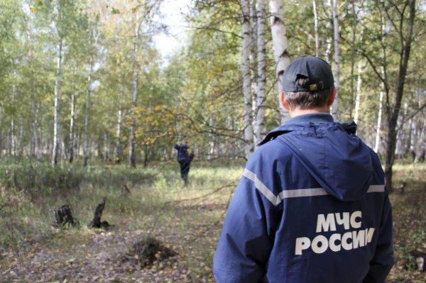 Пропавшего трехлетнего малыша нашли мертвым на границе Воронежской области