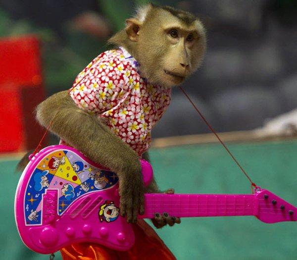 В Рязани ищут сбежавшую из цирка обезьяну