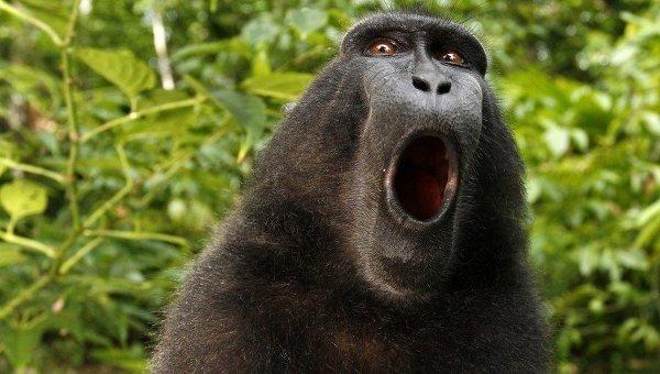 В Рязани на поиски цирковой обезьяны бросили 70 человек, беспилотник и тепловизор