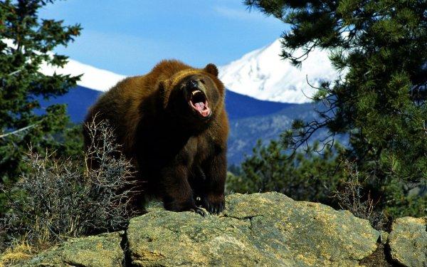 На Камчатке на территории больницы застрелили агрессивного медведя