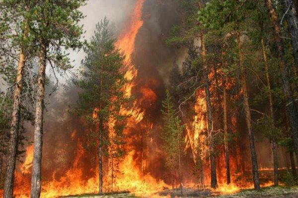 В ЯНАО отправили дополнительные единицы авиации для тушения пожаров