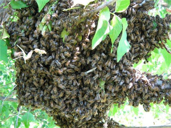 В Индии из-за нападения роя пчел перенесли авиарейс