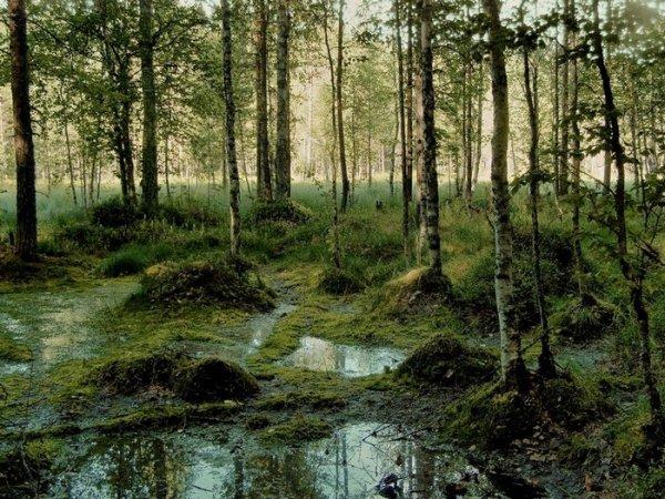 В Омской области на болоте уже несколько дней лежит труп мужчины