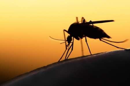 Жительнице Германии ампутировали обе ноги из-за укуса комара