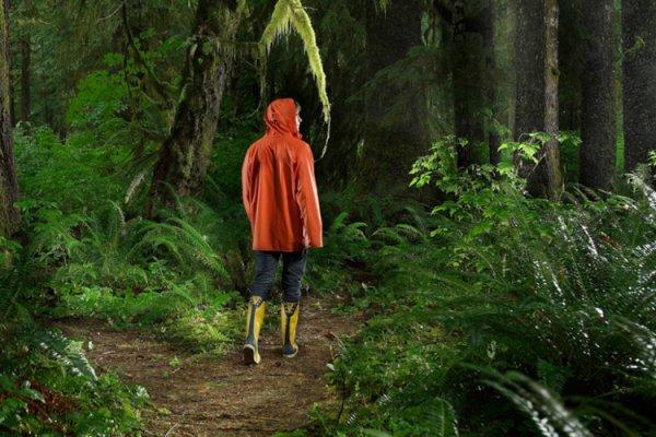 В лесу Финляндии пропали без вести 40 рабочих из Украины и Эстонии