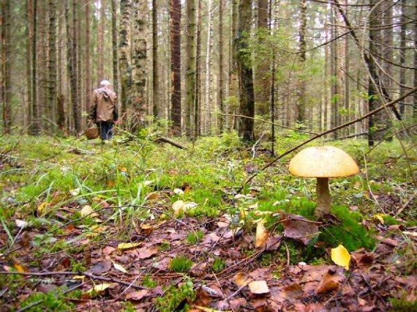 Под Челябинском разыскивают заблудившегося в лесу 11-летнего мальчика