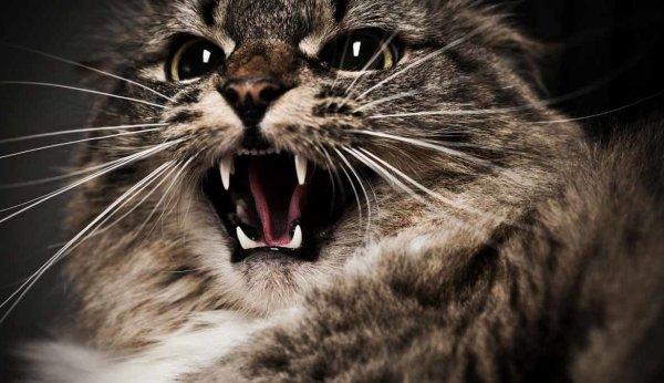 В Турции кошка чуть не загрызла собаку