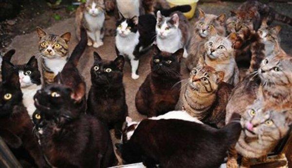 В Омске в частном доме обнаружили обглоданный котами труп пенсионера