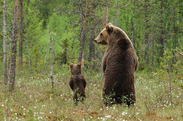 Грибник с Урала самостоятельно отбился от медведицы