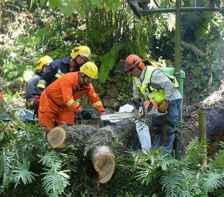 В Португалии на острове Мадейра 200-летний дуб убил 13 человек. ФОТО, ВИДЕО