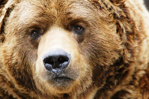 В кафе под Иркутской областью медведь откусил мужчине руку