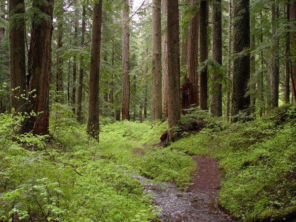 Спасатели ищут пропавших в лесах Прикамья отца и сына