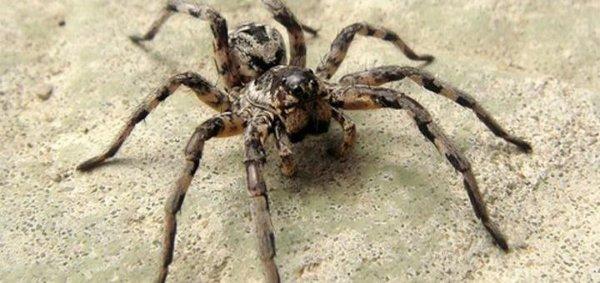 На жительницу Воронежской области напали огромные пауки