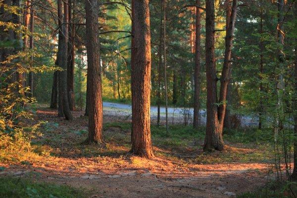 В лесах Карелии потерялся 15-летний парень из Петербурга