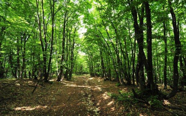 С 25 августа в лесах Башкирии ввели особый противопожарный режим